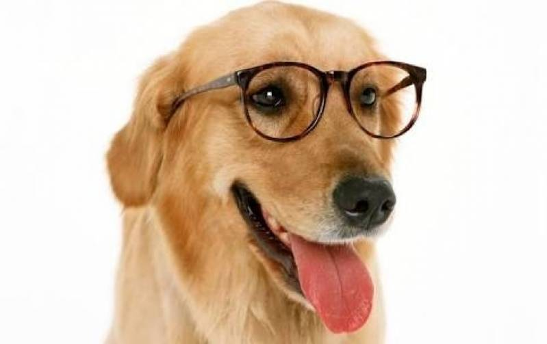 Onde Encontrar Espaço Creche para Cães Bela Vista - Creche e Day Care para Cães