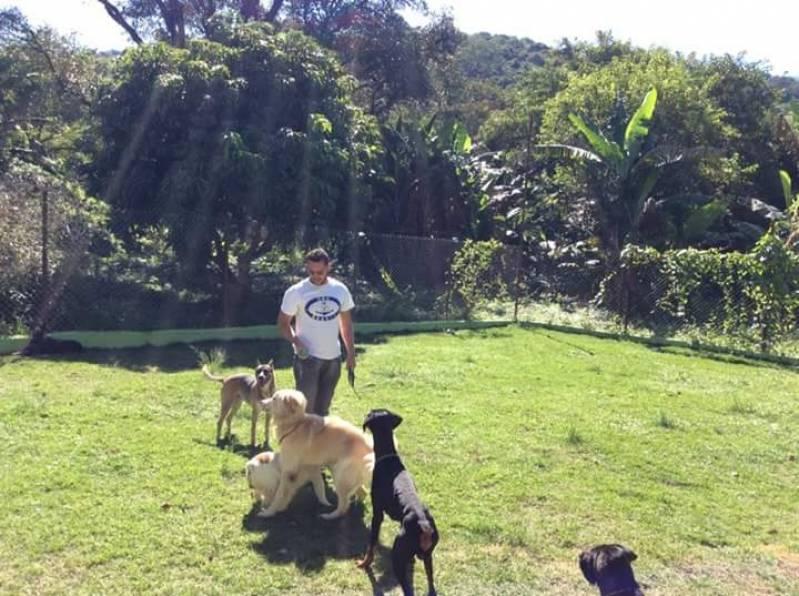 Onde Encontrar Hotel Canino Lapa - Creche Day Care