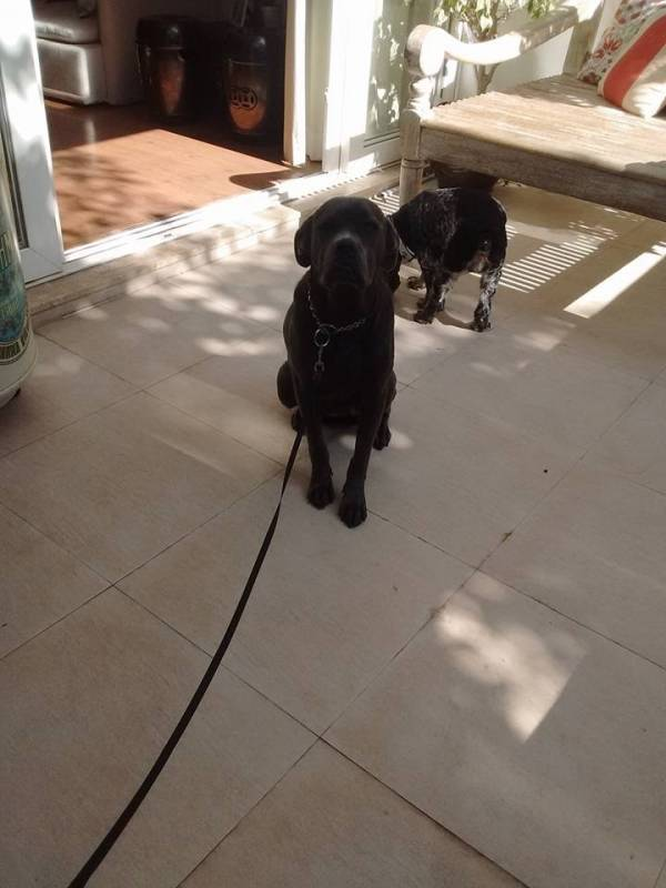 Onde Encontrar Locação de Cachorro de Guarda Butantã - Cachorro para Aluguel