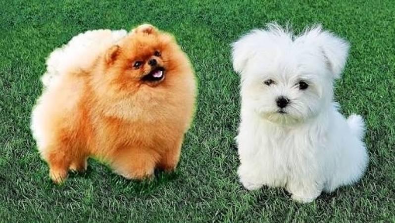 Onde Encontrar Locação de Cão de Segurança Cotia - Locação de Cães de Guarda