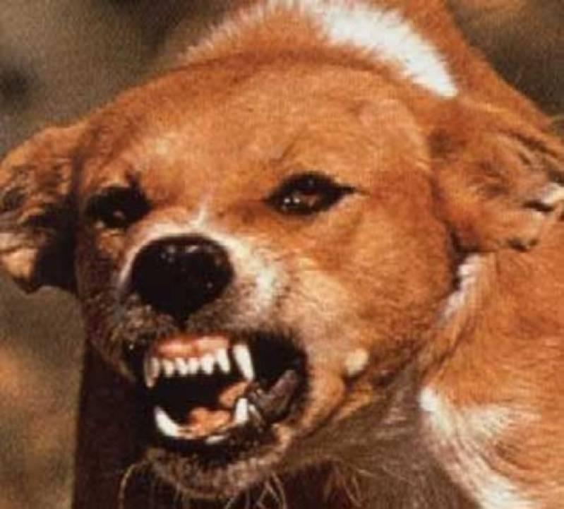 Resultado de imagem para cães raivosos