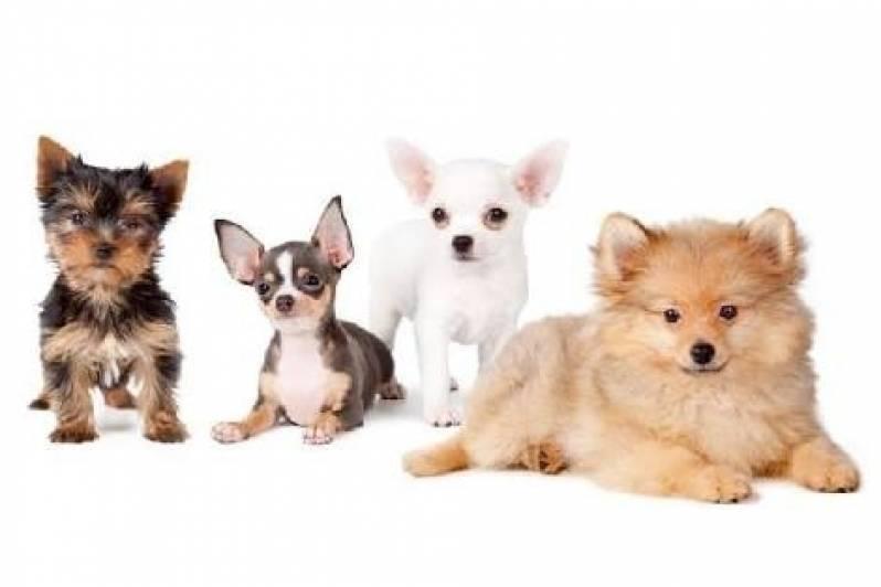 Onde Encontro Creche de Cachorro Vila Olímpia - Creche de Cães