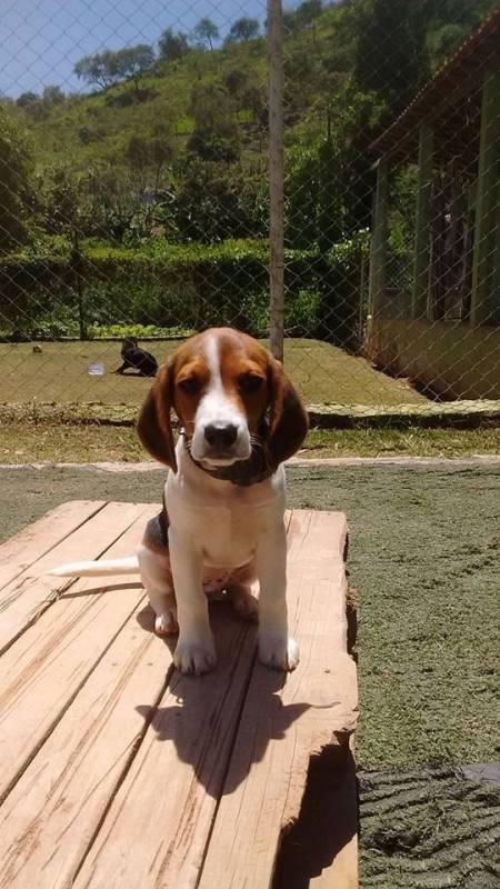 Onde Encontro Creche de Cães com Day Care Rio Pequeno - Creche de Cães com Day Care