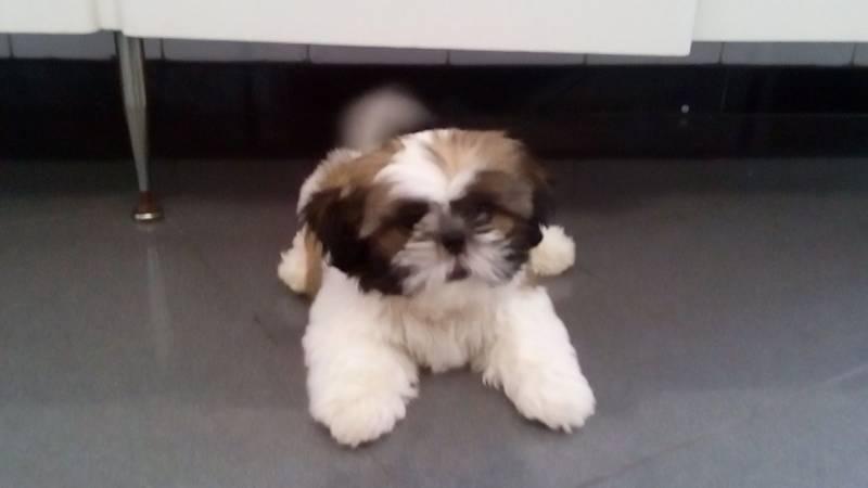 Onde Encontro Creche de Hospedagem para Cachorro Bom Retiro - Creche de Hospedagem para Cachorro