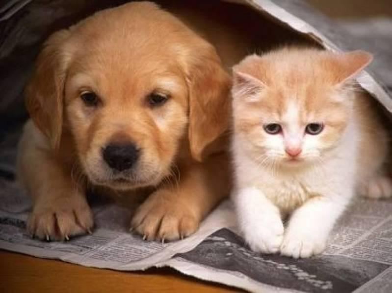 Onde Encontro Creche para Animais Bela Vista - Creche de Cães com Day Care