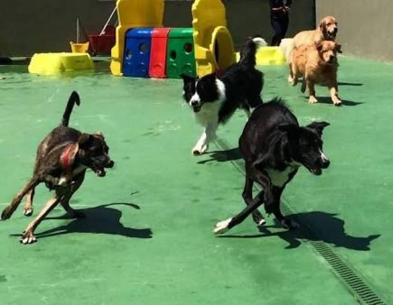 Onde Encontro Day Care de Cachorro Raposo Tavares - Creche Day Care