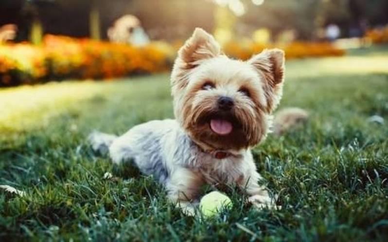 Onde Encontro Espaço Creche para Cães Carapicuíba - Creche de Hospedagem para Cachorro