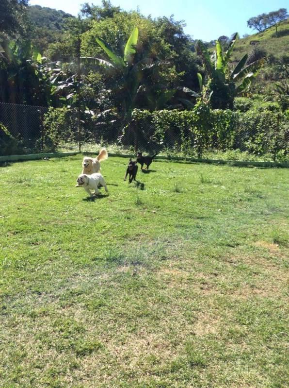Onde Encontro Hotel Canino Rio Pequeno - Creche Day Care