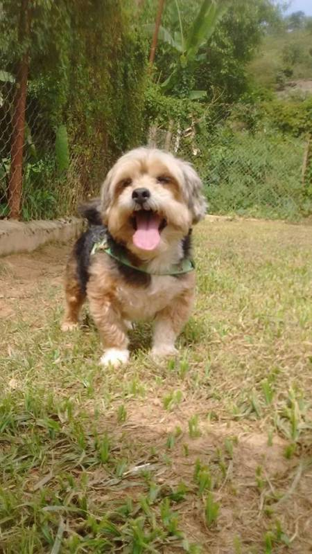 Onde Encontro Serviços de Creche para Cachorro Cotia - Creche de Cachorros Golden