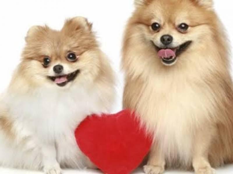Onde Encontro Spa para Cães Santana de Parnaíba - Creche Day Care