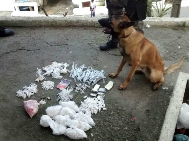 Orçamento de Adestrador para Cães de Faro Santana de Parnaíba - Adestrador e Hotel para Cães