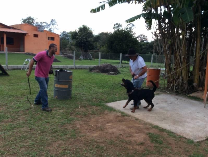 Orçamento de Adestramento para Cão de Guarda Rio Pequeno - Adestrador e Hotel para Cães