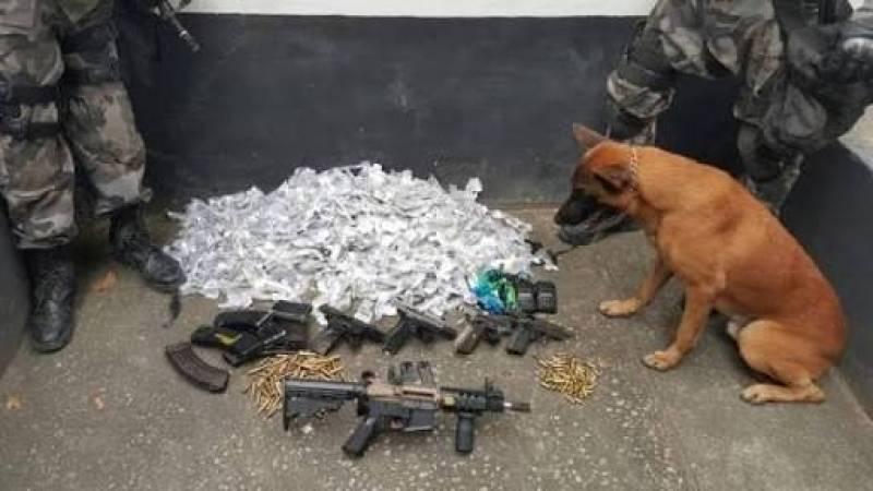 Orçamento de Treinador de Cães Farejadores de Droga Jaguaré - Serviços de Cães Farejadores