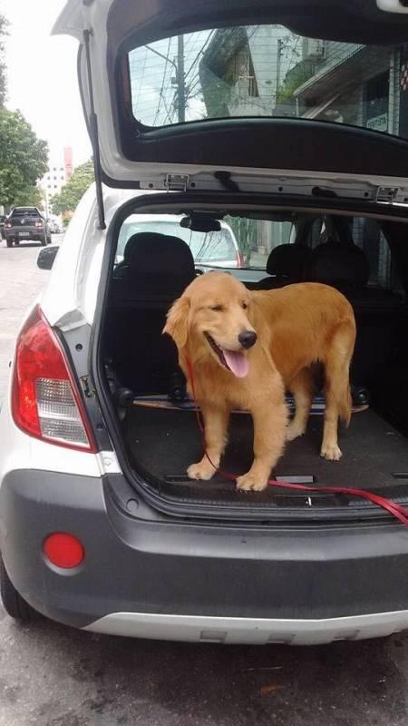 Quanto Custa Adestrador de Cães Golden Jaguaré - Adestrador e Hotel para Cães