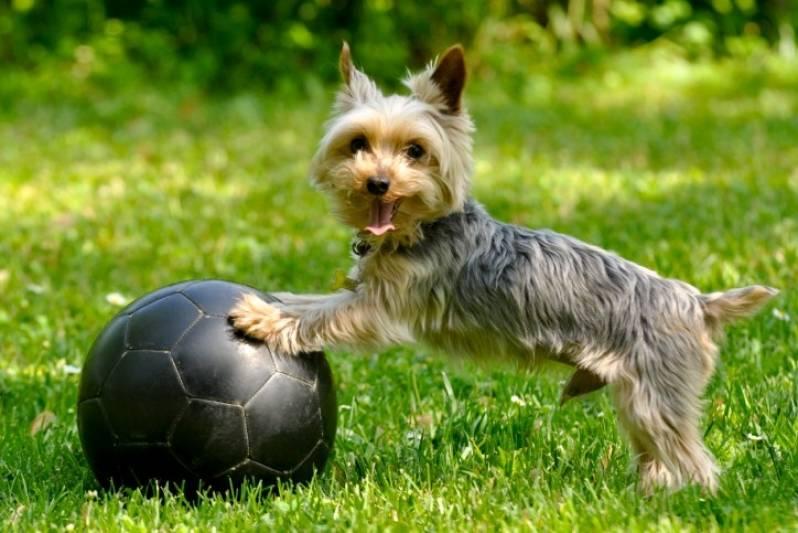 Quanto Custa Adestrador para Filhotes de Cachorro Barueri - Adestrador e Hotel para Cães