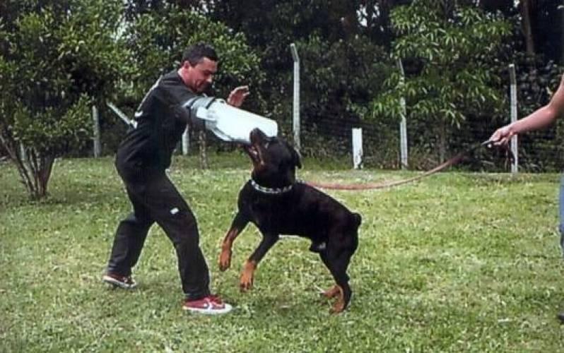 Quanto Custa Adestramento para Cão de Guarda Lapa - Adestrador e Hotel para Cães