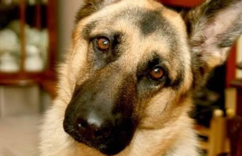 Quanto Custa Aluguel de Cães de Guarda em São Paulo Vila Olímpia - Cachorro de Guarda para Locação