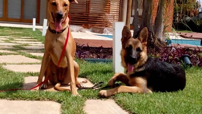 Quanto Custa Aluguel de Cães de Guarda em SP Santana de Parnaíba - Cachorro para Aluguel