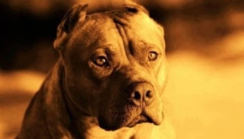 Quanto Custa Aluguel de Cães de Guarda Bom Retiro - Cachorro de Guarda para Locação