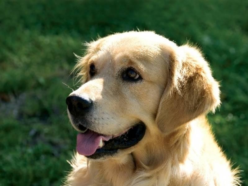 Quanto Custa Cachorro de Aluguel Osasco - Alugar Cachorro de Guarda