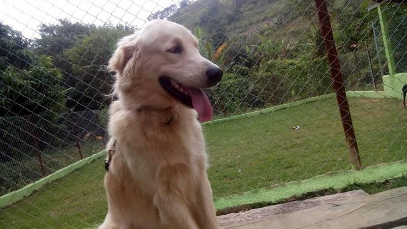Quanto Custa Creche de Cachorros Golden Rio Pequeno - Creche de Cachorro