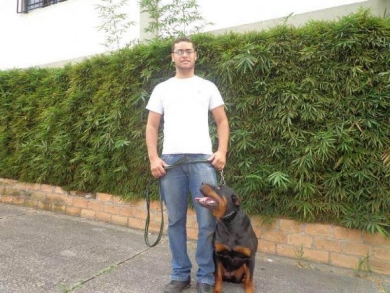 Quanto Custa Curso de Condução de Cães Osasco - Empresa de Adestramento de Cães