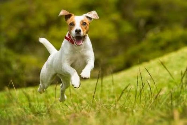 Quanto Custa Day Care Canino Rio Pequeno - Creche Day Care