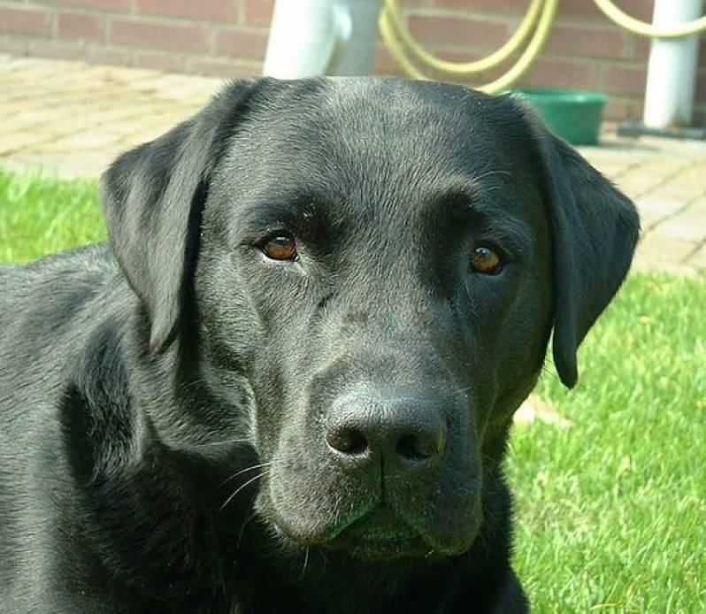 Quanto Custa Locação de Cachorro de Guarda Bom Retiro - Cachorro para Aluguel
