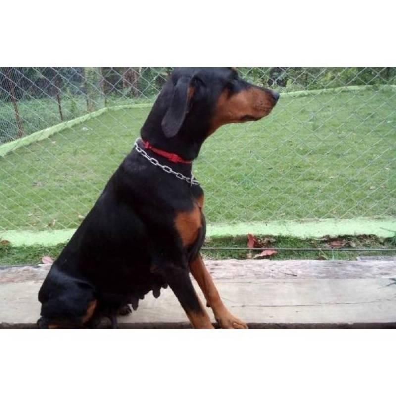 Quanto Custa Locação de Cães de Guarda Aldeia da Serra - - Locação de Cão de Segurança
