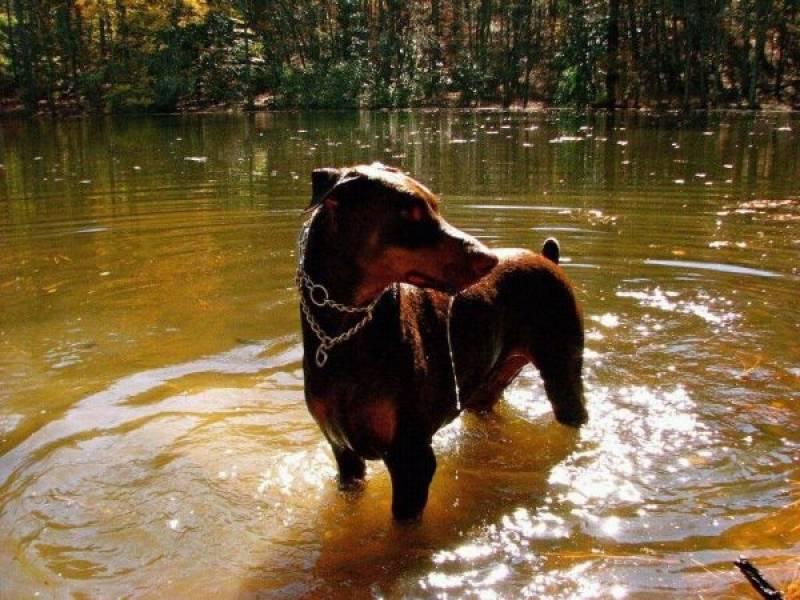 Serviço de Treinador de Cão de Guarda Santana de Parnaíba - Treinador de Cão de Guarda