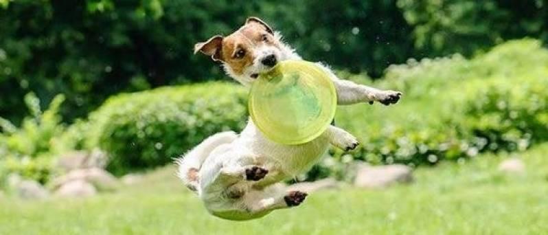 Serviços de Creches para Cachorros Butantã - Creche de Cães