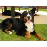 adestrador comportamental de cachorro preço Jaguaré