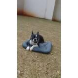 adestrador comportamental de cachorro Bela Vista