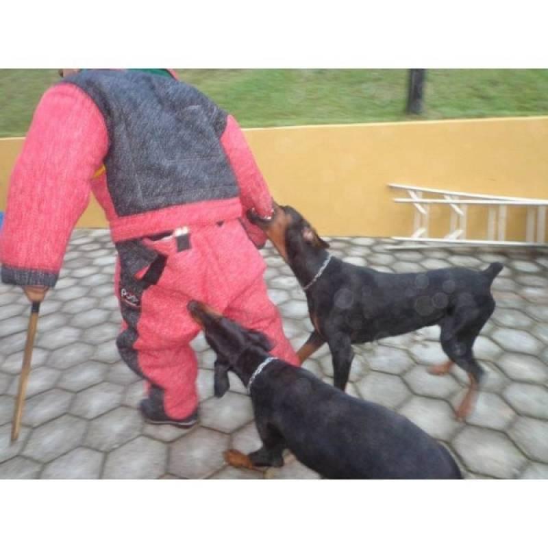 adestrador de cães de guarda Alto da Lapa