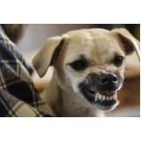 adestrador de cão bravo preço Santana de Parnaíba