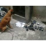 adestrador para cães de faro preço Cotia