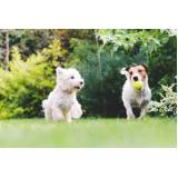 adestrador para filhotes de cachorro Bela Vista