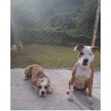 adestrador profissional para cães bravos preço Rio Pequeno