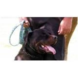 adestrador profissional para cães bravos Rio Pequeno