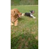 Adestrador de Cães Golden Retriever