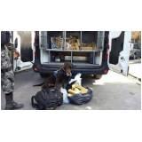 Adestrador para Cães de Faro