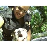 adestradores canino Raposo Tavares