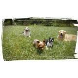 adestradores comportamentais de cachorro Morumbi