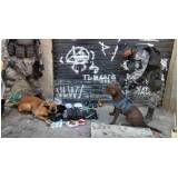 adestradores para cães de faro Osasco