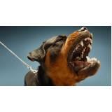 adestradores para cão anti social Jardim Bonfiglioli
