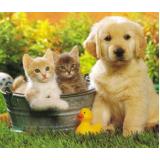 adestradores para filhotes de cachorro Bom Retiro