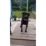 adestradores profissionais para cães bravos Itapevi