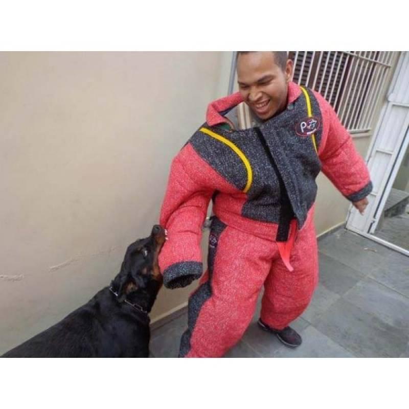 adestramento básico de cães Alphaville