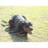 adestramento básico para cachorro Higienópolis