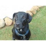adestramento cachorro filhote Cotia